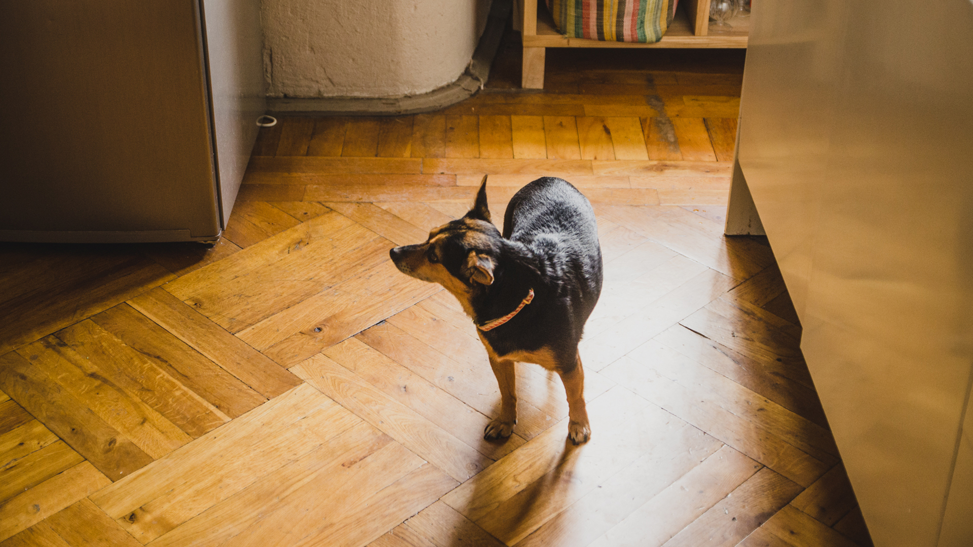 Isabella Paulsen's dog.